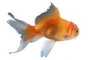 Fishnorouz
